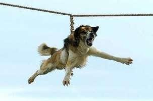 contro il rito di cane trottola in Bulgaria