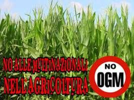 Contro l'uso di OGM in Italia