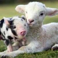 Liberiamo gli animali dalle gabbie