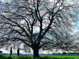 Salviamo le meraviglie naturale di Galatina