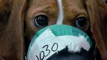 BASTA alla vivisezione!!!! diciamo STOP!!!!!