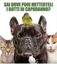 No ai botti di capodanno a Loano!!!