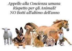 CHIEDIAMO DIVIETO ASSOLUTO DI SPARARE I BOTTI DI CAPODANNO!