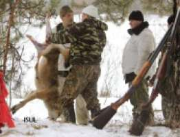 STOP NOW WOLF HUNTING IN SIBERIA