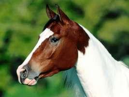L'animale più nobile il cavallo