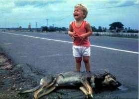 Pena di Morte a chi maltratta gli Animali.