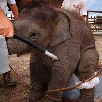 NO al circo CON ANIMALI!