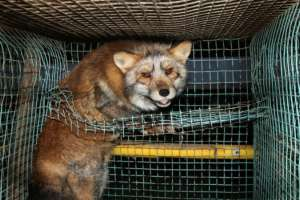 Stop of the fur animals