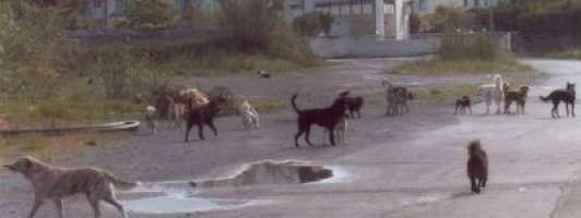 Vogliamo la costruzione di canili nelle provincie siciliane