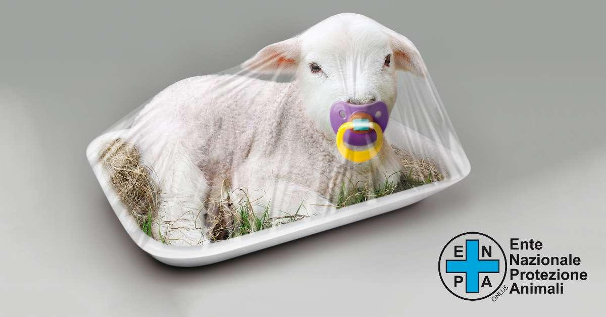 NO alla macellazione e al maltrattamento degli agnelli