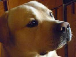 promuovere adozione cani mediante sussidi minimi