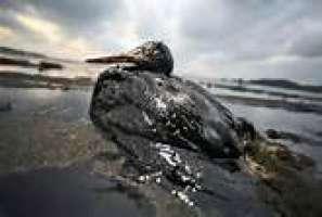 ergastolo per reato di strage ambientale