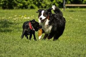 Area verde per cani - Rosignano Solvay