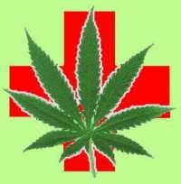 Legalizzazione della marijuana contro il tumore