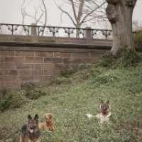 Area cani attrezzata a Trigoria