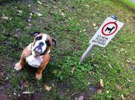 io viaggio con il mio cane..basta divieti!
