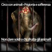 FACCIAMO CHIUDERE I CIRCHI CON ANIMALI!!