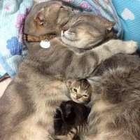 vaccinazioni animali gratuite!