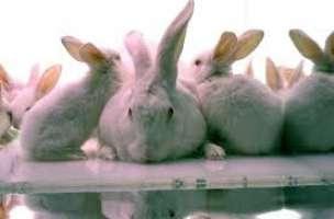 Fermiamo la caccia di conigli abusiva a Catania!