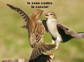 No! alla caccia in Italia.