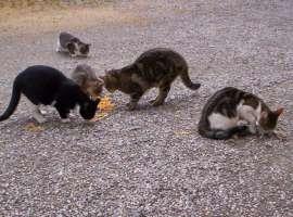 Petizione per l'istituzione dell'anagrafe felina