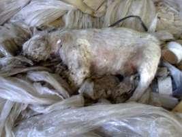 No alla strage dei cuccioli nella ex Vitologatti