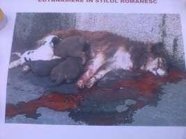 NO ALLA VIOLENZA VERSO GLI ANIMALI IN ROMANIA!!!!