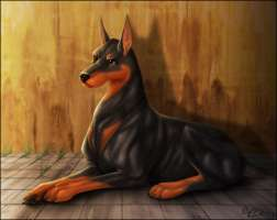 Dobermann Crop