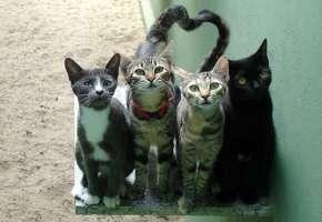 Aiutiamo i gatti randagi di Lucca