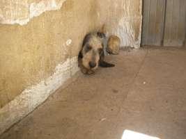 Cambiamo la (cattiva) gestione dei canili in Calabria !