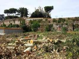 Fermiamo la strage di alberi secolari a Roma