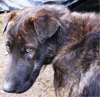 Sterilizzazioni cani randagi a Caltanissetta