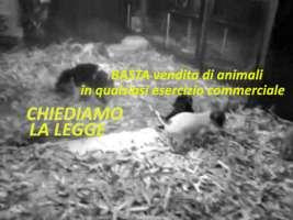 BASTA VENDITA DI ANIMALI nei negozi - chiediamo la Legge