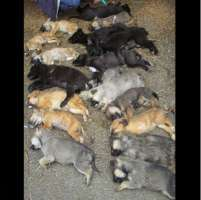 Stop alla strage di cani in Romania!