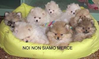 STOP AL TRAFFICO DI CUCCIOLI