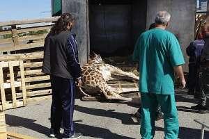 No al circo con animali nel Comune di Andria (BT)