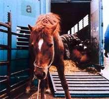 Basta alla macellazione dei cavalli