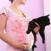 Onder. RAI. Gravidanza Toxoplasmosi gatti (e cani)