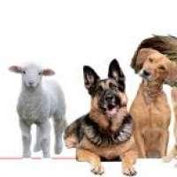 Censimento nazionale degli animali di proprietà.