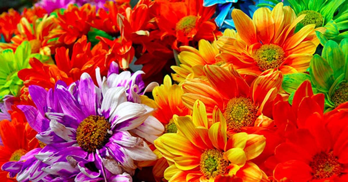 Rivogliamo i fiori durante il Festival di Sanremo