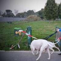 area cani di via bisceglie milano