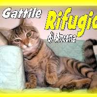 SALVIAMO IL GATTILE RIFUGIO DI ANCONA