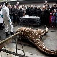 Condanniamo abusi come l'uccisione della giraffa Marius.