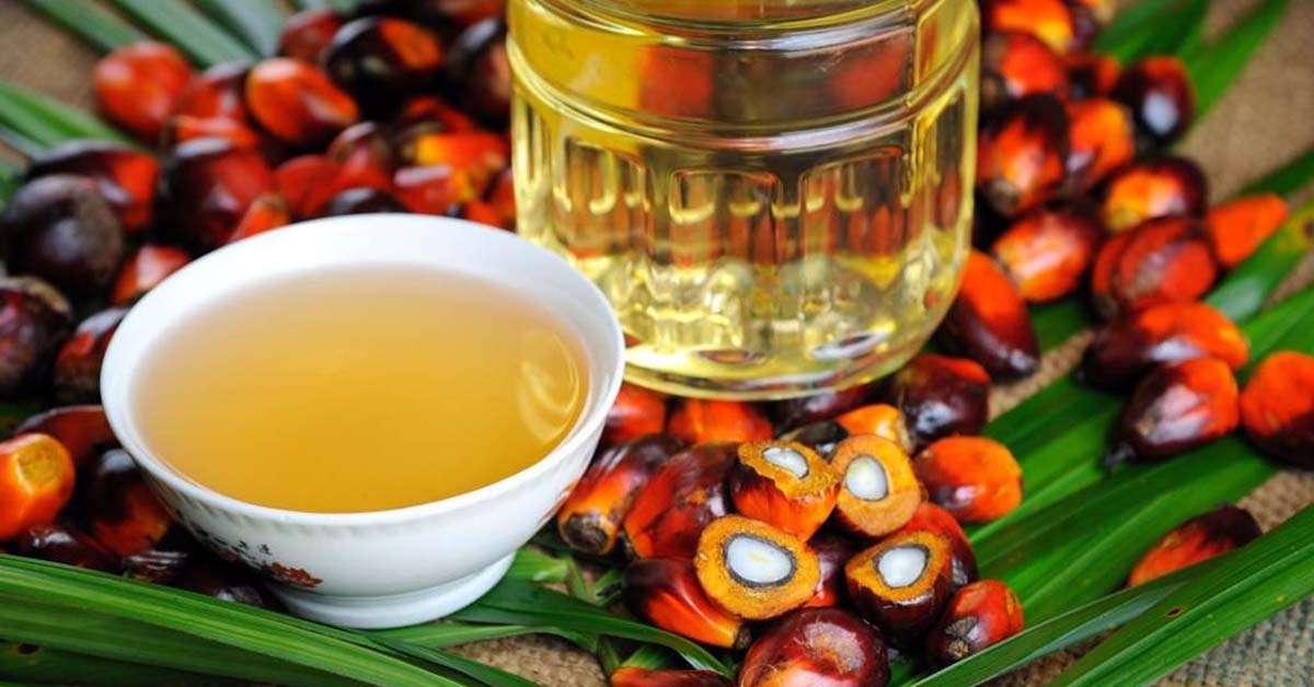 Stop all'uso dell'olio di Palma!