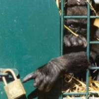FERMIAMO L'UCCISIONE DI ANIMALI IN CATTIVITA'