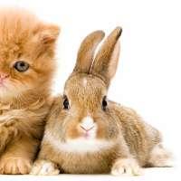 Riconosciamo i conigli come animali domestici