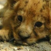 Basta animali morti nello zoo di Copenaghen!