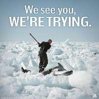 Stop all'uccisione dei cuccioli di foca