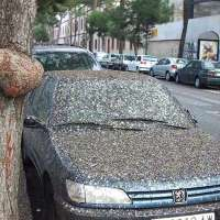 riduzione drastica dei piccioni nelle principali metropol