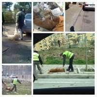 Stop alla strage di cani in albania